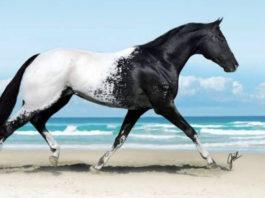 20+ фотографии лошадей, которые кажутся ненастоящими из-за своей красоты