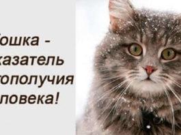 А вы знали, что кошка является показателем благополучия?