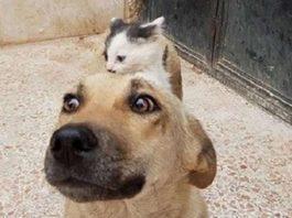 Котёнок-сирота подружился с собакой, потерявшей щенков, и это очень трогательно