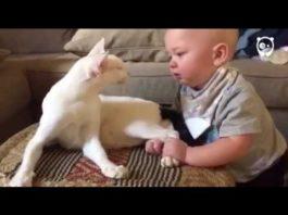 Очень настойчивый малыш схватил кошку за задние лапы. Вот как отреагировала кошка!