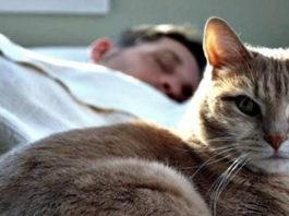 Почему кот всегда спит на человеке: что означают его позы и выбранное место