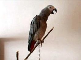 Попугай рассказывает сказку о Красной Шапочке. Я ржал до слез!