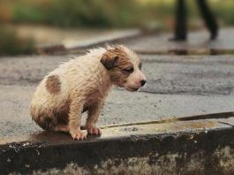 Один год тюрьмы или штраф 10 тысяч евро за выброшенное животное в Италии