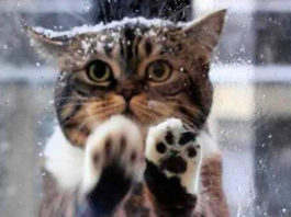 Невероятная история. Кошка пришла в кафе просить помощи людей, ее малыши замерзали на морозе