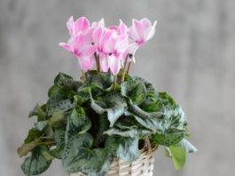 10 комнатных растений, притягивающих любовь и благополучие в семье