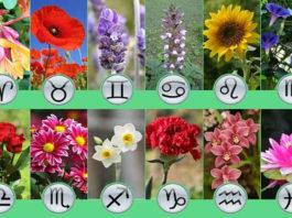 Какой из цветков соответствует вашему имени и является вашим талисманом