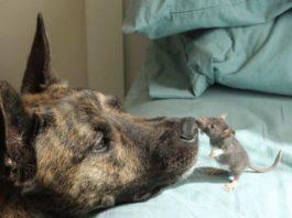 Собака-спасатель долго страдала от депрессии, пока не нашла необычного друга