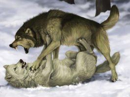 Это мудрая притча про двух волков. Читается за 20 секунд, а запоминается на всю жизнь