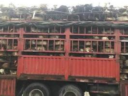 Парень остановил грузовик с 1000 собаками, которых везли на бойню