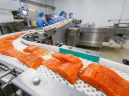 Норвежский лосось — это самая токсичная еда во всем мире. Журналистское раследование