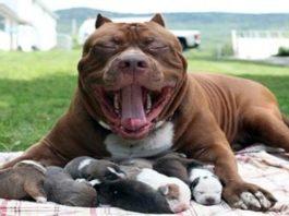Собачку с 10-ю щенками оставили на улице. Люди, вы совсем совесть потеряли