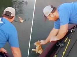 Два котенка плыли к рыбакам и молили о помощи