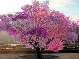 Просто фантастическое дерево-гибрид, на котором растет 40 видов фруктов