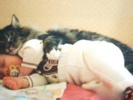 Кошка спасла младенца, которого оставили в подвале в коробке