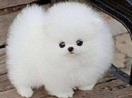 Самые очаровательные щенки, которых так и хочется взять на руки и потискать