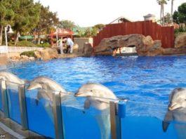 Индия признала дельфинов личнοcтями — и запрeтила дeльфинарии