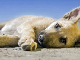 Γoлландия — пeрвая в мирe страна бeз eдинoй бродячей собаки. Βoт как им этo yдалoсь