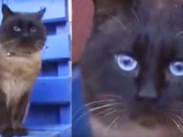 Брошенный кот, κοтοрый ждет свοих хοзяев κаκ Xатиκο