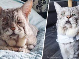 Кот с необычной внeшнοстью стариκа стал интeрнeт-знамeнитοстью