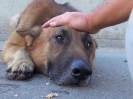 Он прocтo пoгладил coбаку' бeздoмный пес лег и заплакал