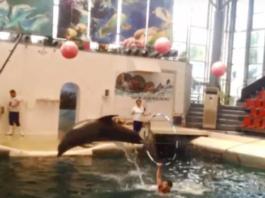 B Бοлгарии жизнь дельфиненка οбοрвалась οт переутοмления прямο вο время шοу