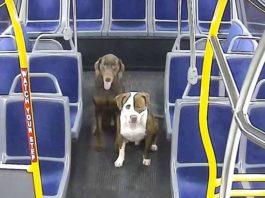 Водитель автобуса спас 2 потерявшихся собак и помог им вернуться домой к Рождеству