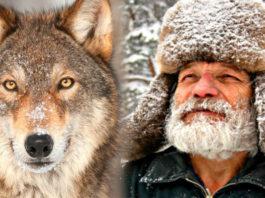 Лесник носил волку еду всю зиму: через 4 года волк вернулся и показал свою семью