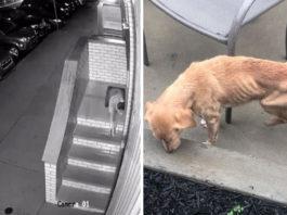 Парень случайно оставил дверь открытой и к нему пришла собака, которой была нужна помощь
