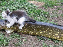 Первая рыбалка кота Васи…