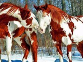 Топ 10 самых красивых лошадей на планете