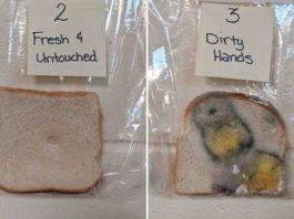 В школе провели эксперимент с хлебом и грязными руками, и вы будете мыть руки постоянно