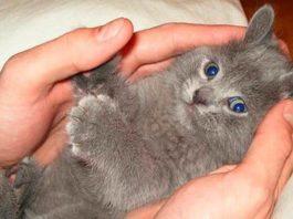 Несколько фото, доказывающих, что коты талантливые и многогранные личности
