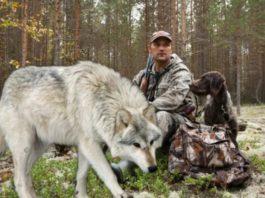 Степан спас волчонка, а через годы Волк пришёл к нему на помощь