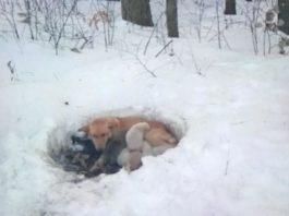 Собака жила в снегу вместе со своими щенками, но несмотря на холод мама их не бросила