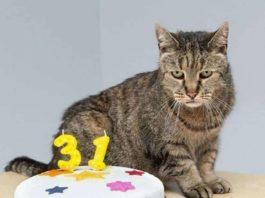 Самому старому коту в мире исполнился 31 год