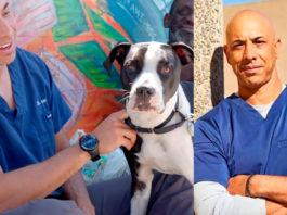 Калифорнийский доктор Айболит: мужчина бесплатно лечит животных бездомных людей