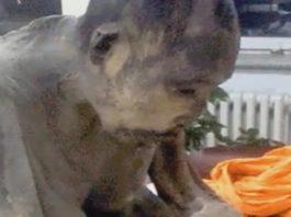 Невозможно поверить. Монах, погребенный заживо, дышал… Ученые через века открыли его страшную тайну