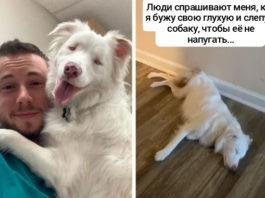 Парень показал, как будит свою слепую и глухую собаку, не пугая ее и получил 13 млн лайков