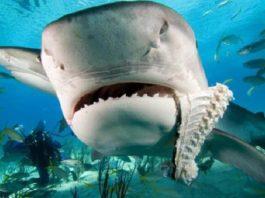 Удивительно, но акулы боятся дельфинов. А вы знаете почему