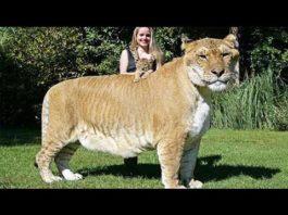 10 невероятно больших животных мира. Размеры этих гигантов заставят вас ахнуть