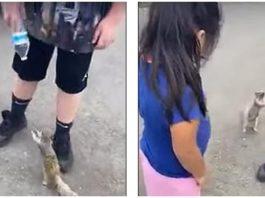 Трогательное видео: белочка попросила у людей воды и они помогли ей