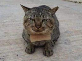 Кот сбежал и вернулся должником, ведь теперь он должен вернуть три скумбрии