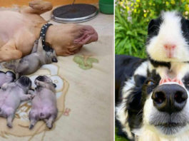 12 добрых, веселых и забавных фотографий собачек, которые обязательно поднимут вам настроение