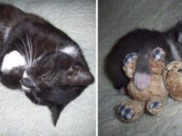 Они выросли, и не заметили как, или 10 котиков-милах