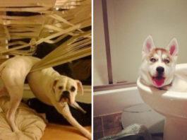 Как собаки ведут себя дома, пока их никто не видит: 15 ярких примера