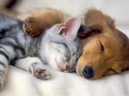 Нежнейшая дружба между котиками и собаками на 15-ти очаровательных снимках