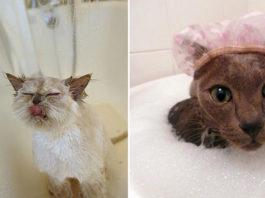Снимки забавных котов, которые с радостью принимают ванну