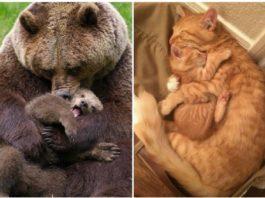 Фото, доказывающие, что у животных тоже есть любовь к детям