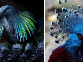 Необычные и редкие породы голубей