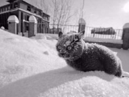 Несколько доказательств того, что кошки и зима друг для друга не созданы